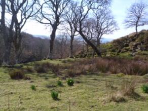 woodland Kintyre